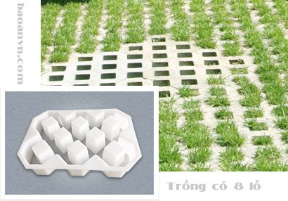 Khuôn gạch bock trồng cỏ 8 lỗ