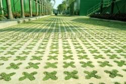 Khuôn trồng cỏ và những giá trị ưu việt